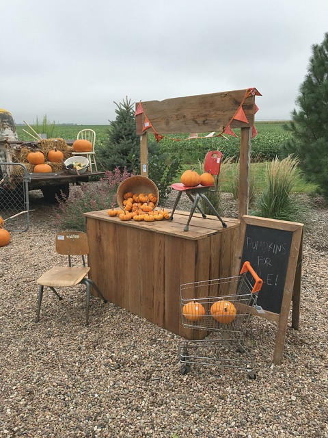 fall-pumpkin-decor